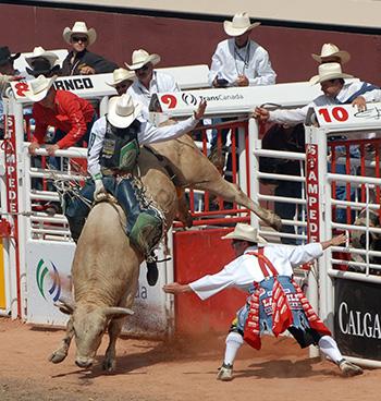 Bull rider leaving the chute